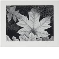 leaf, glacier bay national monument, alaska [1948] by ansel adams